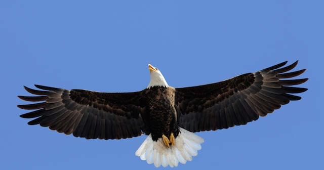 a study of the origin of the eagle The meaning of ezekiel's vision  and the four had the face of an eagle at the  but the symbolism of the form has a much deeper meaning than that of a created .