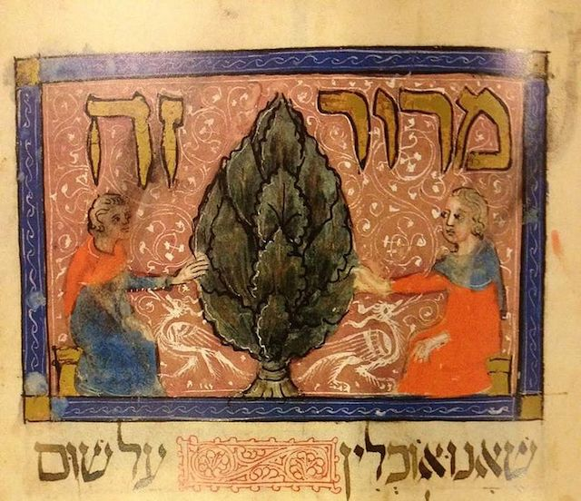 A detail from the Sarajevo Haggadah, in which maror, the bitter herb, is illustrated with an artichoke. (Wikimedia Commons)