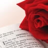 Red rose on a page of the Bible, open to Song of Songs chapter 2.