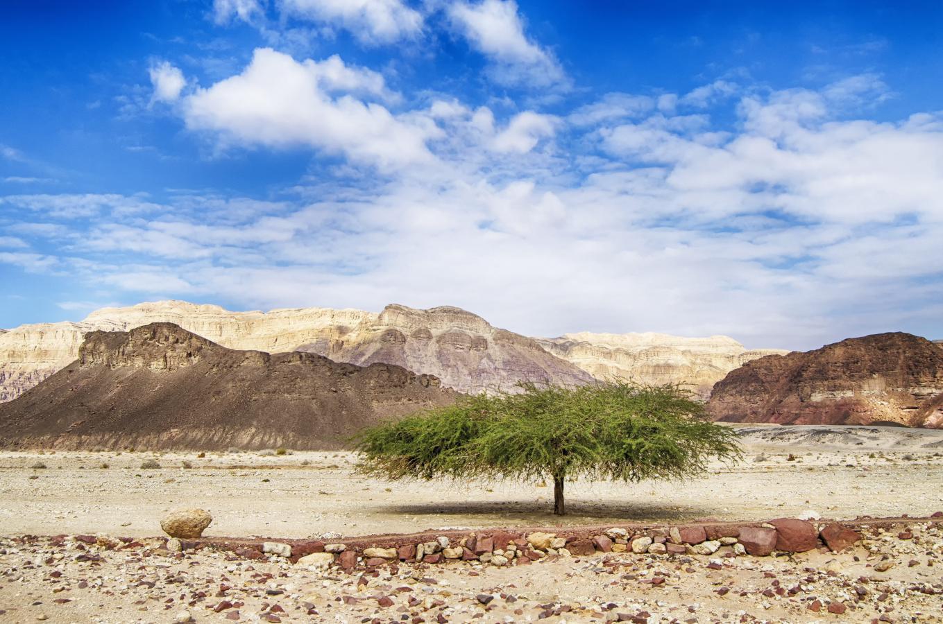 Single tree in the desert.
