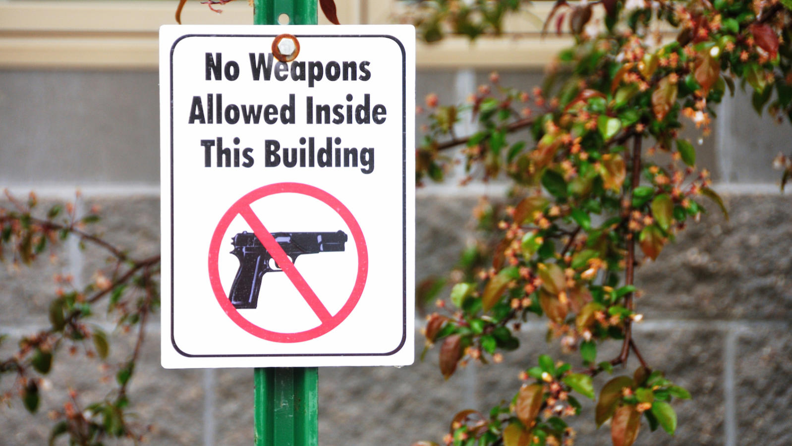 Jews and Guns | My Jewish Learning