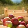 apples passover haroset rosh hashanah