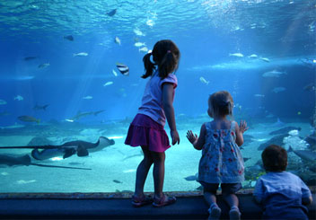 aquarium-children_hp.jpg
