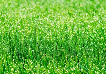 grass-with-dew_hp.jpg