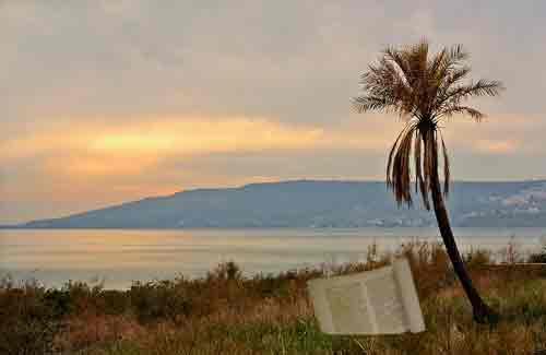 The Kinneret scroll, long-lost until it was found under this very tree.