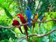protecting-biodiversity-hp.jpg