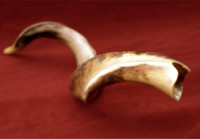 Index page featured imaage for The Shofar