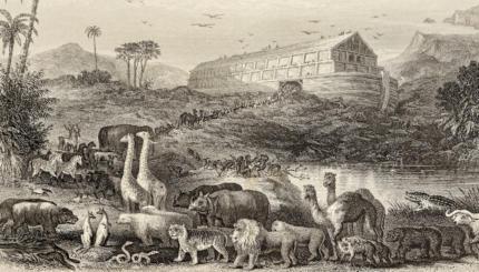 Parashat Noach Noah's Ark Bible Torah