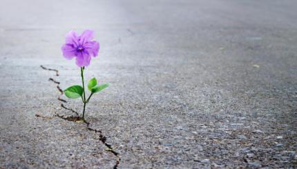 flower growing through pavement cracks