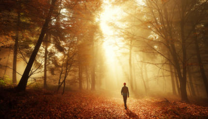 Walk in breathtaking light of the autumn forest