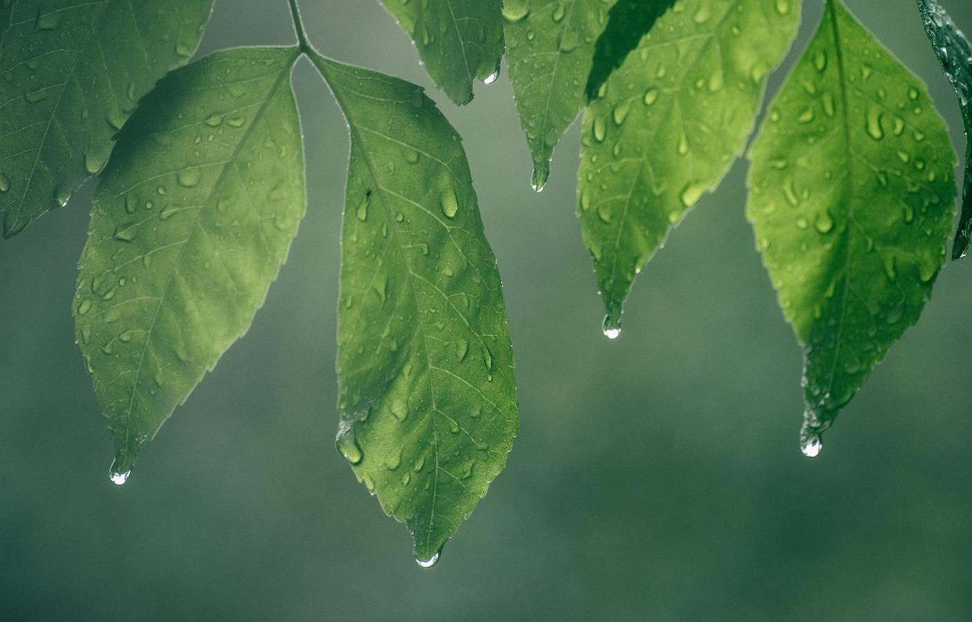 Tefillat Geshem: The Prayer for Rain | My Jewish Learning