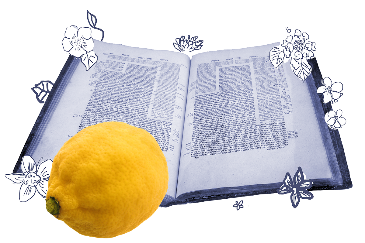 an etrog superimposed over a page of talmud
